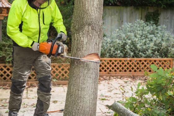 Abattage d'arbres Paliseul