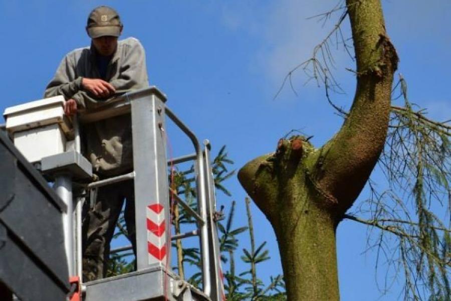 Elagage et abattage d'arbres à Arlon